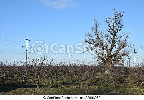 inverno, pomar, jovem - csp32996062
