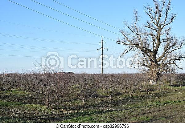 inverno, pomar, jovem - csp32996796