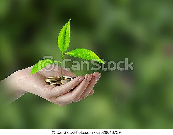investeren, groene handel - csp20646759