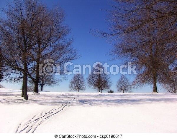 Árbol de invierno - csp0198617