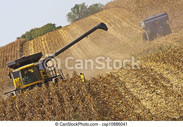 Iowa Cornfields - csp10886041