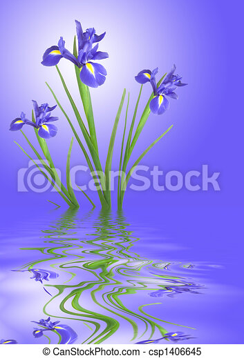 iris, bloem, kalmte - csp1406645