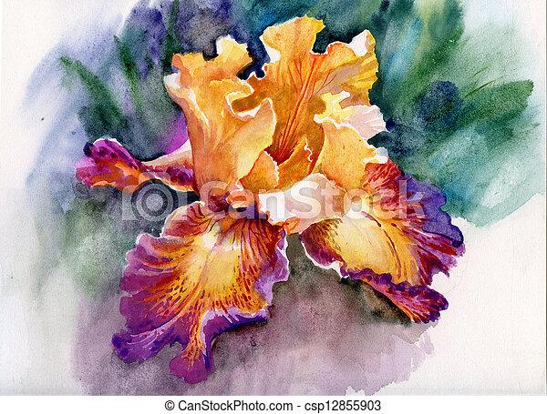 iris, jaune - csp12855903