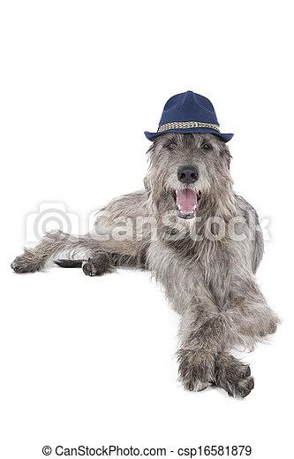 Irish cane wolfhound wolfhound cane studio fondo for Piani casa cane trotto