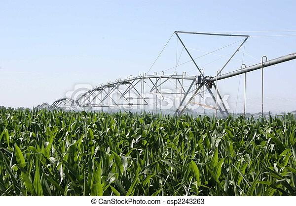 Irrigated corn - csp2243263