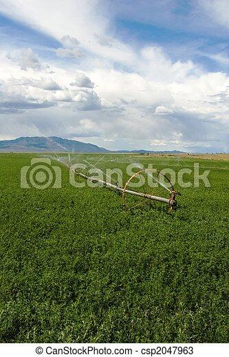 Irrigated Field - csp2047963