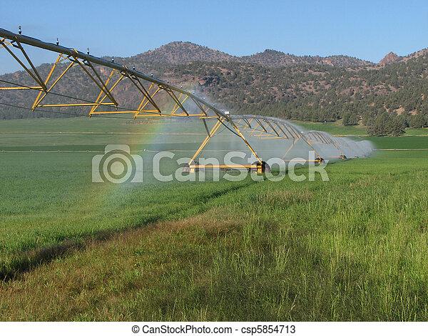 irrigated hay field - csp5854713