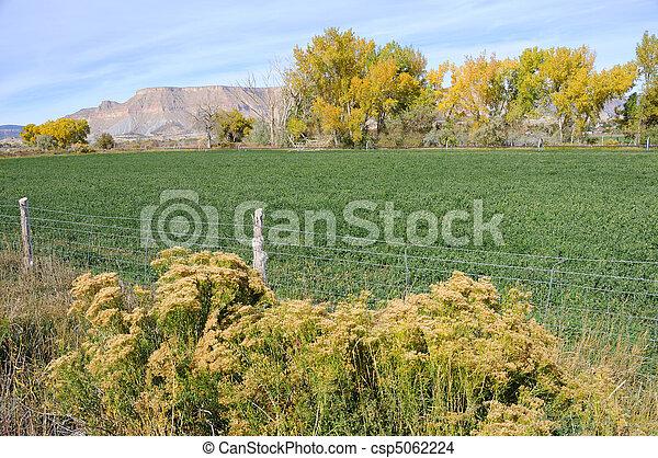 Irrigated Utah Desert Farm in the Fall - csp5062224