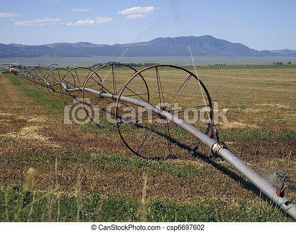 Irrigating a Hay Field - csp6697602