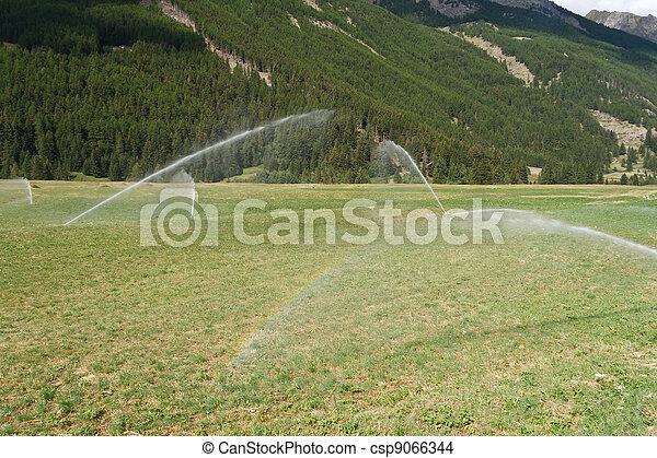 irrigating field on summer - csp9066344