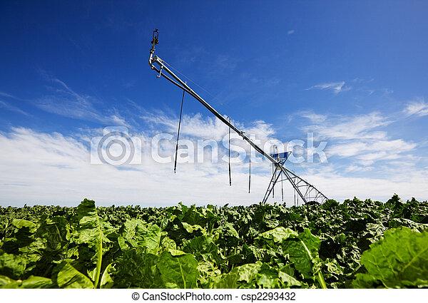 Irrigating turnips - csp2293432