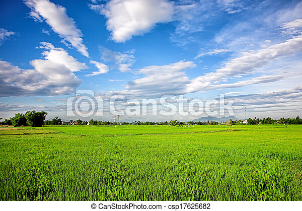 Irrigation canal system in rice field - csp17625682