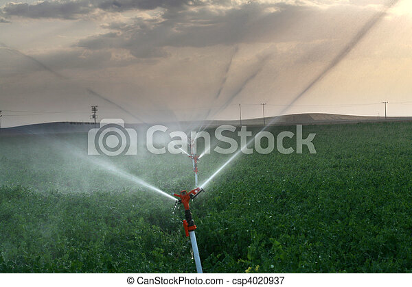 Irrigation sprinklers water a farm field against late afternoon sun  - csp4020937
