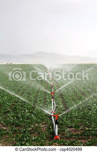Irrigation sprinklers water a farm field against late afternoon sun  - csp4020499