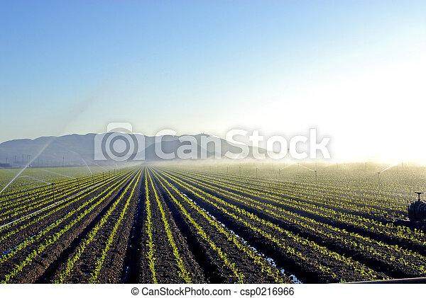 Irrigation - csp0216966
