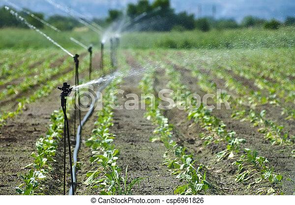 Irrigation - csp6961826