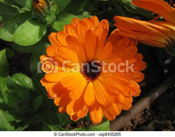 Irrigation system, flower. - csp8435265