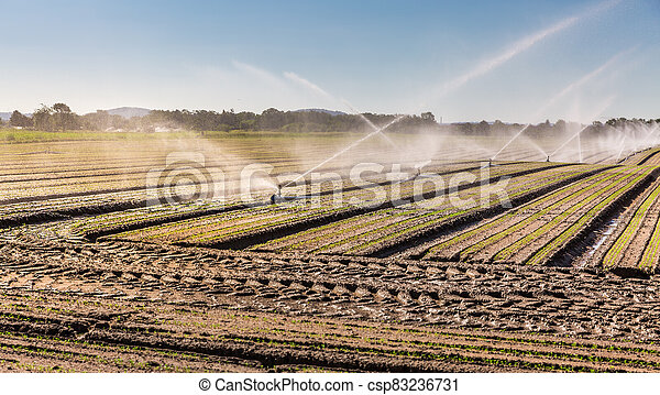 Irrigation system on a large farm field. Water sprinkler installation. - csp83236731