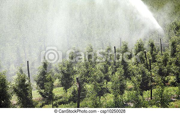 Irrigation system - csp10250028