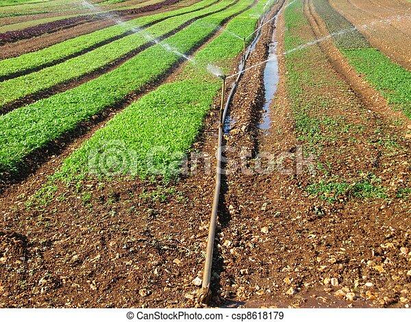 Irrigation system - csp8618179