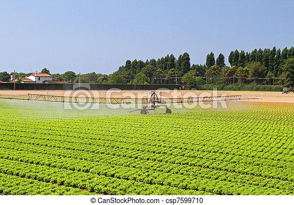 Irrigation system - csp7599710