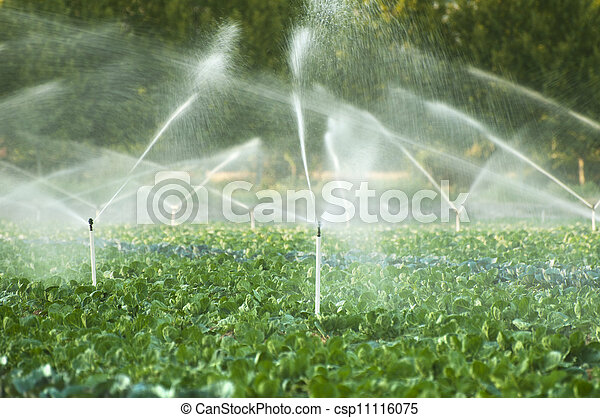 Irrigation systems in a vegetable garden - csp11116075