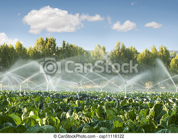 Irrigation systems in a vegetable garden - csp11116122