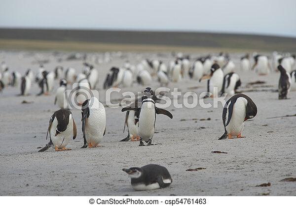 Pingüinos en la isla más oscura - csp54761463
