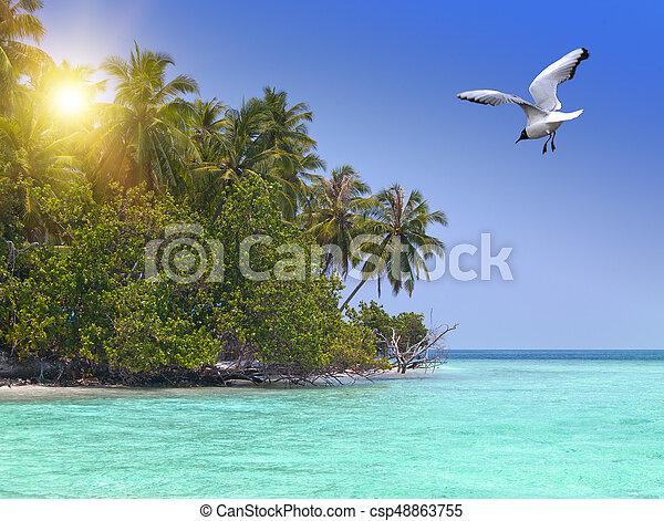 Isla con palmeras en el océano y la gaviota voladora - csp48863755