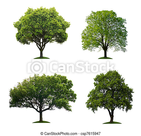 isolé, arbres - csp7615947