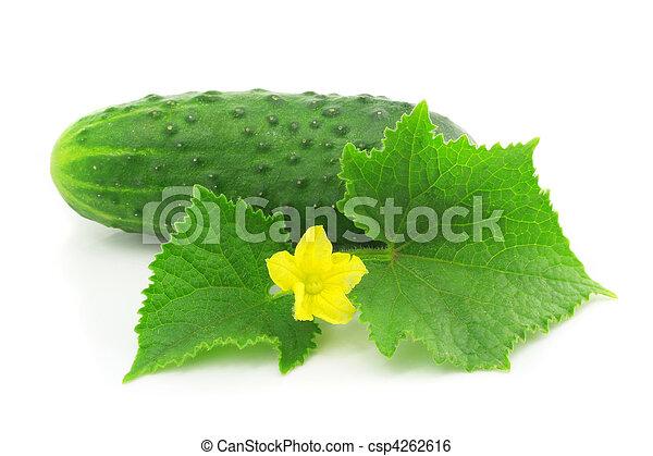 isolé, fruit, vert, pousse feuilles, légume, concombre - csp4262616