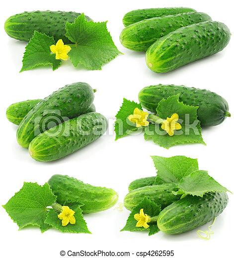 isolé, vert, pousse feuilles, fruits, légume, concombre - csp4262595