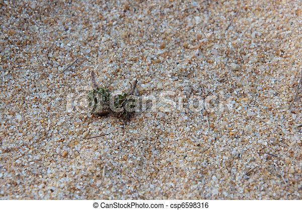 isola, spiaggia sabbia, fondo - csp6598316