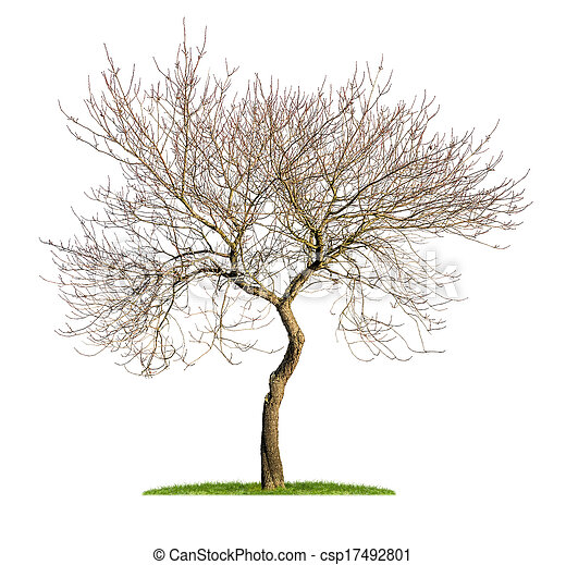 isolated almond tree in the winter - csp17492801