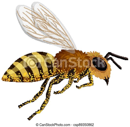 Isolated bee on white background - csp89350862