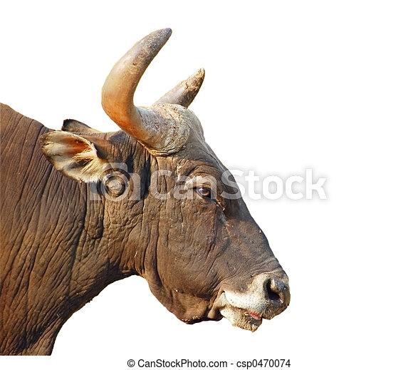 Isolated bull\\\'s head - csp0470074