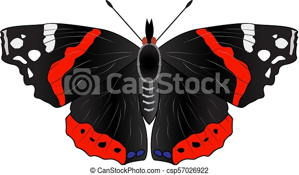 Isolated butterfly on a white background - csp57026922