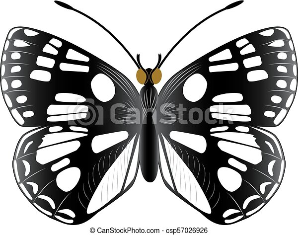 Isolated butterfly on a white background - csp57026926