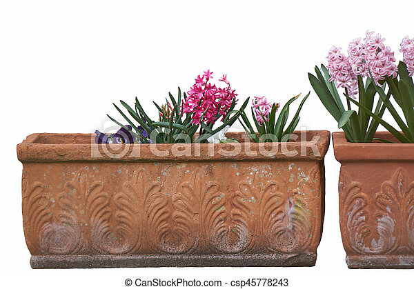Isolated Colored Hyacinths In Ornamental Vases