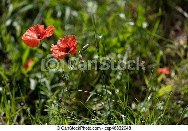 Isolated flower on black backround - csp48832648