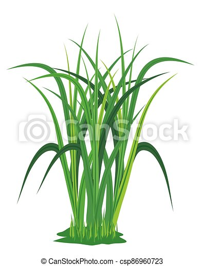 isolated grass plant on white background vector design - csp86960723