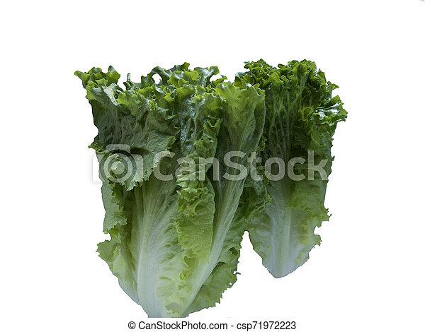 Isolated Lettuce on white background - csp71972223