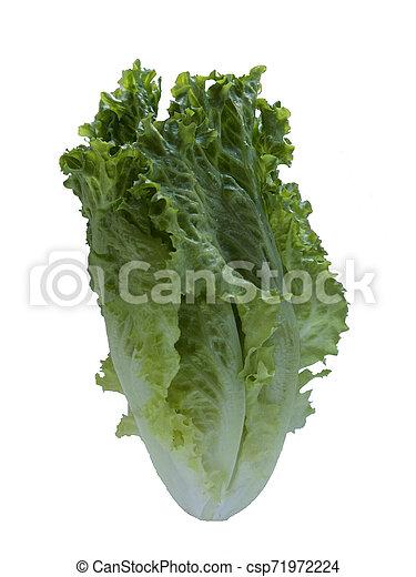 Isolated Lettuce on white background - csp71972224
