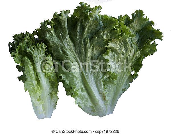 Isolated Lettuce on white background - csp71972228