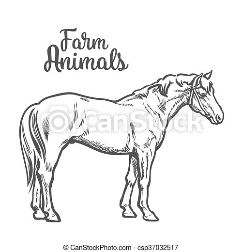Isolated one brown horse - csp37032517