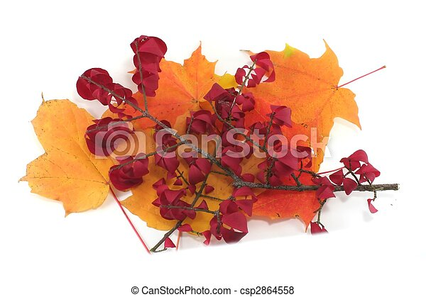 Isolated pile of autumn leaves - csp2864558