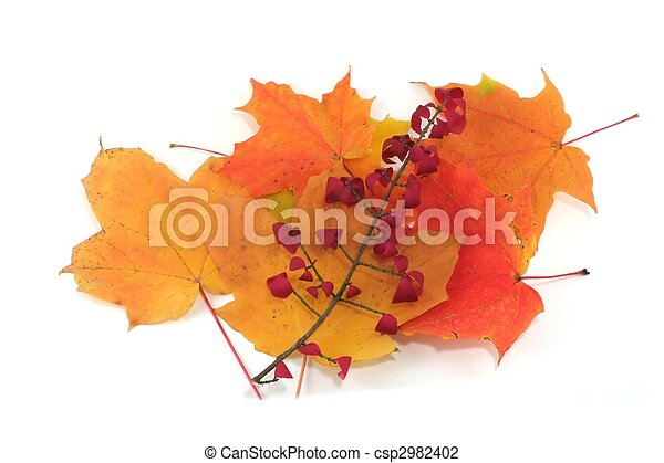Isolated pile of autumn leaves - csp2982402