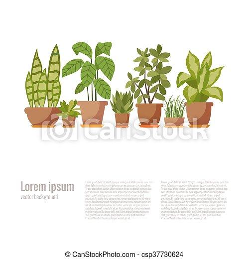 Isolated Plante Maison Ensemble