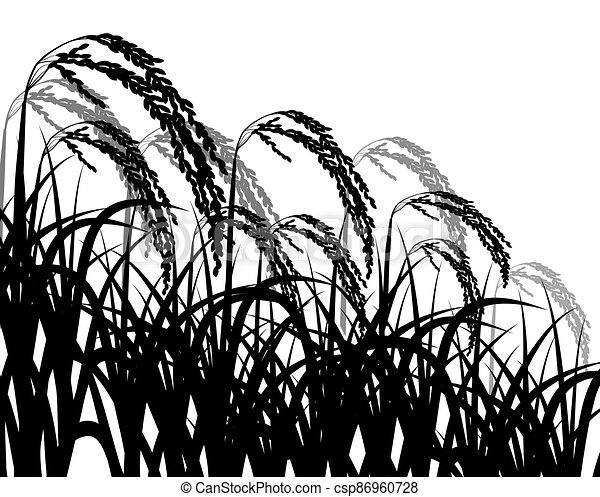 isolated rice plant on white background vector design - csp86960728