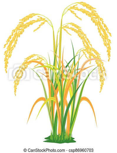 isolated rice plant on white background vector design - csp86960703